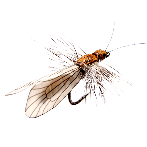 Caddis Adult Brown