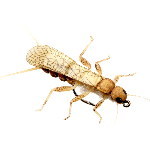 Stonefly Adult Golden